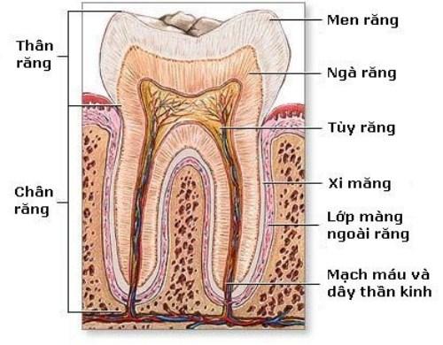 cách trị ê buốt răng hiệu quả nhất hiện nay 2