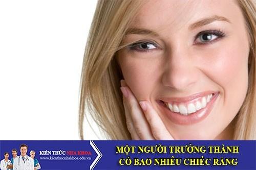 Một Người Trưởng Thành Có Bao Nhiêu Chiếc Răng?